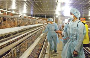 Chăn nuôi gia cầm theo quy trình an toàn sinh học, khép kín là hướng phát triển chăn nuôi giai đoạn 2016 - 2020 góp phần kiểm soát ô nhiễm môi trường. ảnh: Trang trại chăn nuôi gà quy mô tập trung tại xã Dân Hạ (Kỳ Sơn).