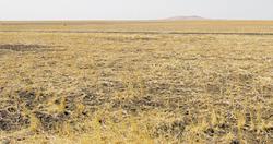 Đất nông nghiệp ở Sudan nhưng thuộc sở hữu nước ngoài đang bị bỏ hoang.