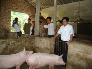 Mô hình nuôi lợn hướng nạc, sử dụng hầm biôga của gia đình bà Nguyễn Thị Lý, xóm Yên Sơn, xã Yên Lạc (Yên Thuỷ) cho năng suất cao, giảm ô nhiễm môi trường.