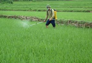 Nông dân xã Tú Sơn (Kim Bôi) phun thuốc BVTV để kịp thời khống chế hiện tượng sâu cuốn lá nhỏ bùng phát thành dịch trên diện rộng.