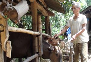 NNCĐDC Bùi Văn Nhừm, xóm Mòi, xã Tân Lập (Lạc Sơn) được vay 5 triệu đồng từ Quỹ CĐDC đầu tư chăn nuôi, phát triển kinh tế gia đình.