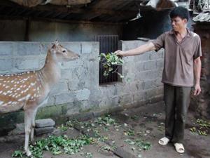 CCB Lê Văn Hán chăm sóc hưu sao cao sản của gia đình.