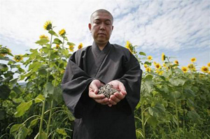 Từ cuối tháng 5, Koyu Abe, nhà sư tại ngôi đền Joenji tại tỉnh Fukushima, đông bắc Nhật Bản, đã tổ chức một nhóm tình nguyện để phân phát các hạt hướng dương cho người dân địa phương cùng trồng.