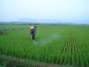 Nông dân xã Thanh Lương (Lương Sơn) phun thuốc phòng trừ rầy trên diện tích lúa mùa 2011