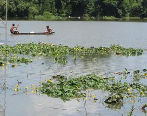 Giàn mướt đang cho thu hoạch giờ chỉ còn thấy ngọn nổi trên mặt nước.