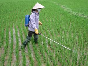 Nông dân xã Dân Hòa (Kỳ Sơn) phòng trừ tập đoàn rầy gây hại trên lúa mùa