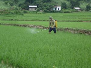 Theo hướng dẫn của cán bộ khuyến nông, nông dân xã Dân Hòa (Kỳ Sơn) phun thuốc diệt trừ sâu cuốn lá nhỏ trên phần diện tích lúa đã phân hóa đòng.