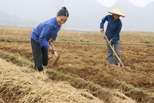 """Hội viên phụ nữ xã Vĩnh Đồng (Kim Bôi) chăm chỉ, cần mẫn với công việc đồng áng; thực hiện hiệu quả tiêu chí """" không đói nghèo"""" trong CVĐ """"5 không, 3 sạch""""."""