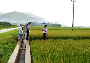 Đoàn công tác kiểm tra mức độ gây hại của bệnh bạc lá, đốm sọc vi khuẩn trên diện tích lúa vụ mùa trà sớm của xã Cư Yên, huyện  Lương Sơn.