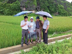 Cán bộ Chi cục BVTV hướng dẫn sử dụng thuốc phun trừ bệnh bạc lá, đốm sọc vi khuẩn đang gây hại mạnh trên các trà lúa sớm của huyện Lương Sơn.