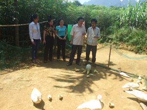 Đoàn kiểm tra thực tế mô hình nuôi ngan thịt tại gia đình anh Bùi Văn Thắng, xóm Tân Vượng, xã Lỗ Sơn (Tân Lạc).
