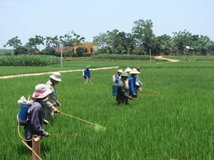 Nông dân xã Sào Báy (Kim Bôi) tập trung chăm sóc diện tích lúa bị nhiễm bệnh vụ hè - thu năm 2013. Ảnh: B.Minh