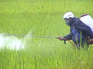 Huyện Kỳ Sơn huy động toàn bộ máy động cơ phun trừ thuốc trên diện tích lúa nhiễm bệnh của xóm Độc Lập, xã Hợp Thịnh.