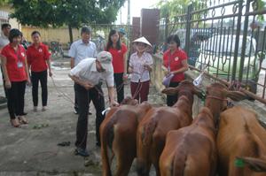 Trao bò giống cho các hộ gia đình.