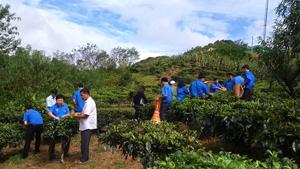 ĐV- TN cơ quan Tỉnh đoàn đóng góp ngày công giúp đỡ gia đình liệt sĩ.