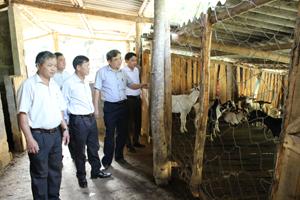 Hội đồng thẩm định NTM tỉnh và huyện đi kiểm tra mô hình sản xuất hiệu quả ở xã Mông Hoá.
