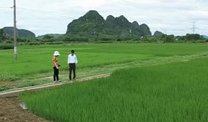 Hệ thống kênh mương xã Yên Lạc (Yên Thuỷ) được đầu tư kiên cố phục vụ sản xuất nông nghiệp.