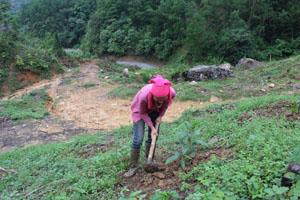 Hộ định canh, định cư xóm Nưa, xã Vầy Nưa (Đà Bắc) trồng rừng sản xuất để tăng thu nhập, ổn định cuộc sống.