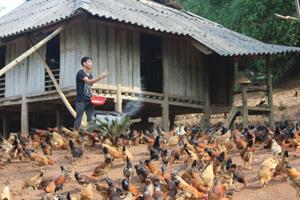 Thiết thực học tập và làm theo tấm gương đạo đức Hồ Chí Minh, nhiều hộ gia đình ở xã Phúc Tuy (Lạc Sơn) vươn lên thoát nghèo trong phát triển kinh tế từ mô hình nông trại, gia trại.