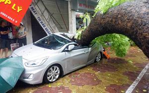 Gió giật cấp 9 trong bão Mirinae khiến nhiều cây xanh ở Hà Nội gãy, đổ.