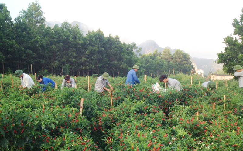 Lac Thuy district promotes production chains