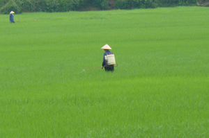 Nông dân xã Yên Mông (TPHB) tăng cường phun thuốc phòng trừ sâu bệnh gây hại trên lúa mùa.