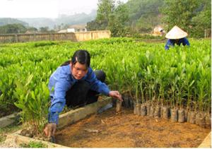 Công ty TNHH một thành viên Lâm nghiệp Hòa Bình chủ động gieo ươm trên 700 vạn giống cây lâm nghiệp phục vụ mùa trồng rừng năm 2011.