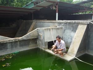 CCB Đỗ Mạnh Hùng làm giàu trên chính mảnh đất quê hương.