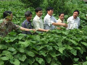 Các đồng chí lãnh đạo UBND tỉnh kiểm tra mô hình kinh tế trồng su su lấy ngọn tại xã Quyết Chiến (Tân Lạc). Ảnh:  L.C