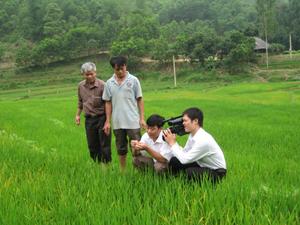Cán bộ Chi cục BVTV kiểm tra diễn biến của tập đoàn rầy trên diện tích lúa mùa huyện Lạc Sơn.
