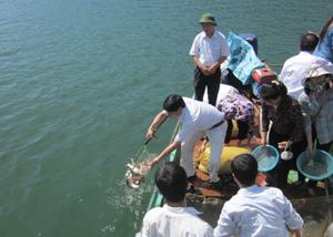 Từ vốn chương trình khuyến ngư, hàng tấn cá giống đã được thả xuống hồ.