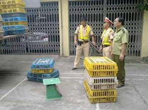 Lực lượng chức năng tỉnh Quảng Ninh bắt giữ các thùng gà giống lậu. Ảnh: T.P