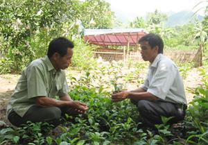 Cán bộ trạm KN-KL huyện Kim Bôi hướng dẫn kỹ thuật trồng xạ đen cho các hộ dân xóm Lươn, xã Thượng Tiến.