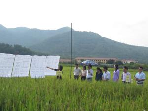 Học viên khóa học báo cáo kết quả nghiên cứu so sánh các loại giống lúa trên đồng ruộng.