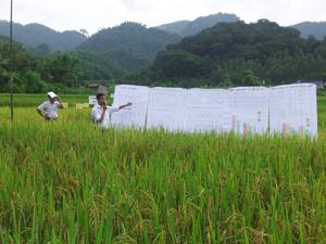 Hình thức lớp học hiện trường giúp người nông dân nắm bắt được các kiến thức, kỹ năng được học.
