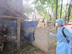 Thú y viên xã Nam Thượng, Kim Bôi phun tiêu độc khử trùng định kỳ môi trường chăn nuôi tại các hộ để tăng hiệu quả phòng bệnh.