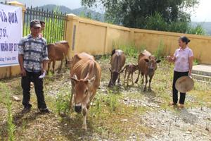 """Các hộ dân xã Pù Bin (Mai Châu) nhận bò giống từ chương trình """"Ngân hàng bò"""" của T.Ư Hội Chữ thập đỏ Việt Nam. Ảnh: P.V"""