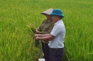 Cán bộ khuyến nông hướng dẫn nông dân xã Dân Chủ (TPHB) cách phát hiện và phòng trừ các loại sâu bệnh hại lúa vụ mùa 2013.