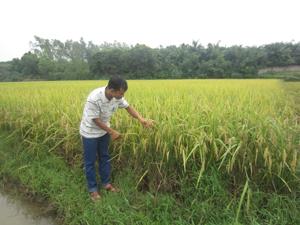 Khắc phục khó khăn, đội ngũ cán bộ tổ BVTV luôn bám sát diễn biến trên đồng ruộng để kịp thời hỗ trợ nông dân phòng - chống sâu bệnh hại trên cây lúa.