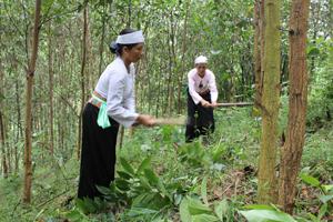 Nhiều hộ dân xã Đồng Môn (Lạc Thuỷ) đầu tư phát triển kinh tế rừng mang lại thu nhập cao.