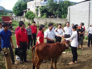 Giao bò cho các hộ gia đình khó khăn có đủ điều kiện chăn nuôi bò theo chương trình
