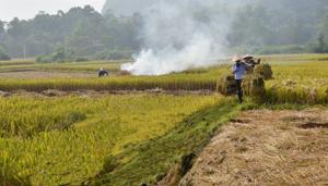 Nông dân xã Dân Hạ (Kỳ Sơn) đốt rơm rạ ngay tại ruộng, sau khi thu hoạch - đây là cách xử lý không những gây ô nhiễm không khí mà còn làm mất đi phần lớn lượng dinh dưỡng cho đất.