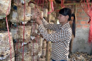Chị Trịnh Thị Thanh Hòa, cán bộ trạm Khuyến nông – khuyến lâm Đà Bắc phát triển mô hình trồng nấm ăn và nấm dược liệu mang lại giá trị kinh tế cao.