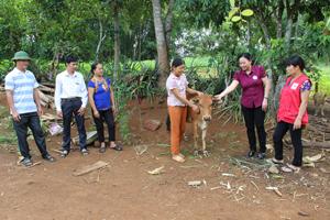 Hộ nghèo, hộ có hoàn cảnh khó khăn ở xóm Mè, xã Bình Chân, huyện Lạc Sơn được giao bò theo chương trình ngân hàng bò của huyện.