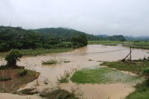 Mưa lớn kéo dài gây úng ngập trên 140 ha lúa và hoa màu trên địa bàn huyện Kỳ Sơn.
